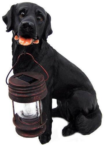 Black Dog With Lantern Light